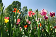 Spring flowers on the street on a sunny day. Spring flowers  on a sunny day Stock Photo