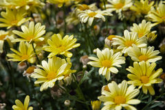 Spring flowers in the sun Royalty Free Stock Photo