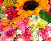 spring flowers Sunflower abstract backgrounds stock photo