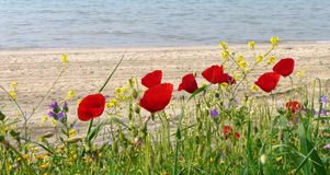 Spring flowers by sunny beach. In April Stock Photography