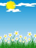 Spring Flowers During A Sunny Day. Vector illustration Royalty Free Stock Photo