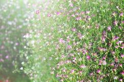 Spring flowers on sunshine morning background Royalty Free Stock Images
