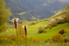 Spring flowers towards a mountain valley Royalty Free Stock Photos
