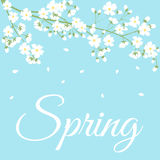 Spring flowers on tree branch Stock Photography