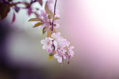 Spring flowers on a tree closeup with blurred background Stock Photos