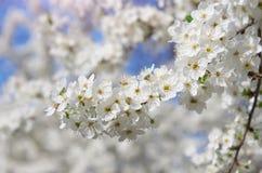 Spring flowers on tree. Stock Photo