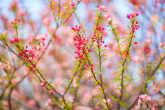 Spring Flowers on a Tree Royalty Free Stock Photos