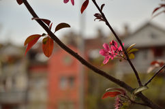 Spring Flowers on Tree in Residential Area stock images