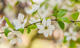 spring flowers trees background royalty free stock image
