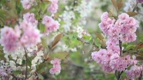 Spring flowers on trees stock footage