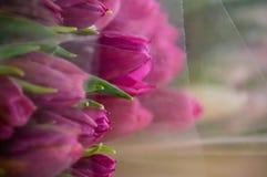 Spring flowers tulip background stock image