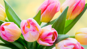 Spring flowers. Tulip bouquet on the bokeh background. Stock Photo
