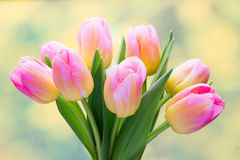 Spring flowers. Tulip bouquet on the bokeh background. Royalty Free Stock Images