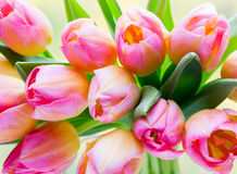 Spring flowers. Tulip bouquet on the bokeh background. Stock Photography