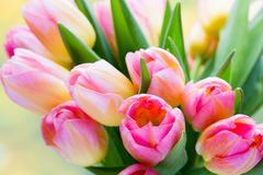 Spring flowers. Tulip bouquet on the bokeh background Royalty Free Stock Image