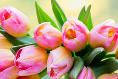 Spring flowers. Tulip bouquet on the bokeh background. Stock Images