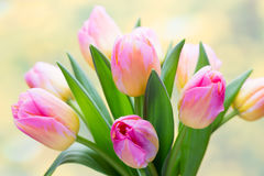 Spring flowers. Tulip bouquet on the bokeh background. Stock Image