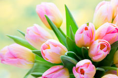 Spring flowers. Tulip bouquet on the bokeh background. Royalty Free Stock Photography