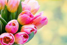 Spring flowers. Tulip bouquet on the bokeh background. Royalty Free Stock Photos