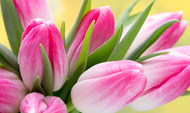 Spring flowers. Tulip bouquet on the bokeh background. Royalty Free Stock Image