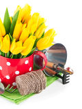 Spring flowers tulip with garden tools Royalty Free Stock Photos