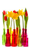 Spring flowers tulip and narcissus in colorful glass vases Royalty Free Stock Images