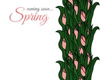 Spring flowers. Tulips. Greeting Card for March 8. Tulips in a doodle style stock illustration