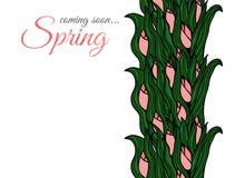 Spring flowers. Tulips. Stock Photos