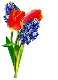 Spring flowers tulips and hyacinths Stock Images