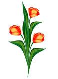 Spring flowers tulips Royalty Free Stock Images