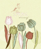 Spring flowers. Tulips. March 8 Stock Images