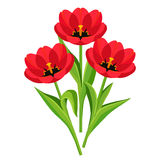 Spring flowers tulips over white Stock Photography