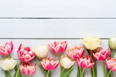 Spring flowers tulips on pastel colors background. Retro vintage style royalty free stock photography