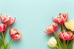 Spring flowers, tulips on pastel colors background. Retro vintage style stock image