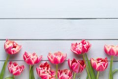 Spring flowers tulips on pastel colors background. Retro vintage style stock photo