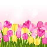 Spring flowers tulips seamless pattern horizontal Stock Photography