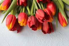 Spring flowers tulips on a stone textured table. March 8, international women`s day, mother`s day or birthday. Royalty Free Stock Images