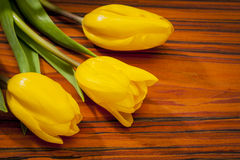 Spring flowers tulips - symbols of Easter Royalty Free Stock Photo