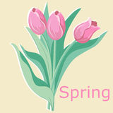Spring flowers tulips. Vector illustration Royalty Free Stock Photos