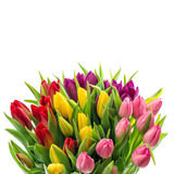 Spring flowers Tulips on white background Royalty Free Stock Photo