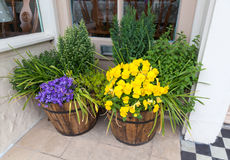 Spring flowers in two wooden tubs in a doorway. Stock Photos