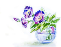 Spring flowers in vase, watercolor Royalty Free Stock Photos