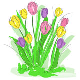 Spring flowers vector Stock Image