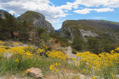 Spring flowers in Verdon Canyon Royalty Free Stock Images