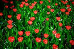 Spring flowers. Spring flowers,very colorful flowers Stock Images