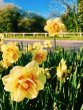 Spring flowers. Vibrant colours of Spring Royalty Free Stock Images