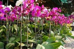 Spring flowers, Vietnam flower market Stock Image
