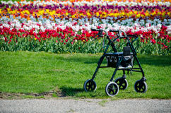 Spring flowers  and walker Stock Photography