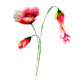 Spring flowers watercolor illustration Royalty Free Stock Image