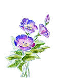 Spring flowers, watercolor illustration Royalty Free Stock Photos